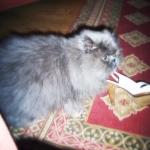Kitty.JPG